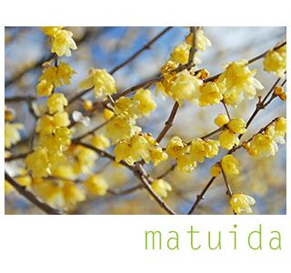 matuida_320